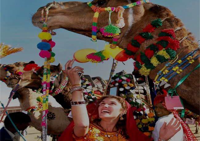 Falling Camels Rajasthan Pushkar Festival