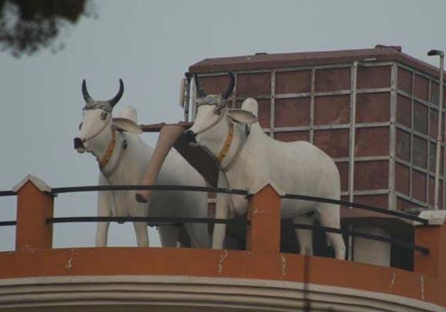Pair of Bullocks Water Tank