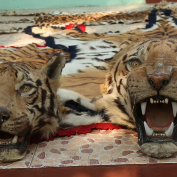 Illegal Tiger Trade | Source: nationalgeographic.org