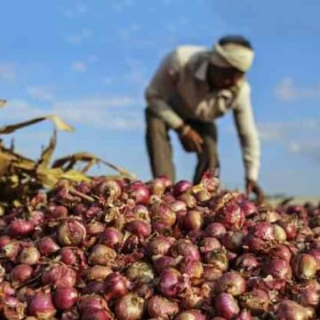 Onion Farmer | Image Credit: nationalheraldindia.com