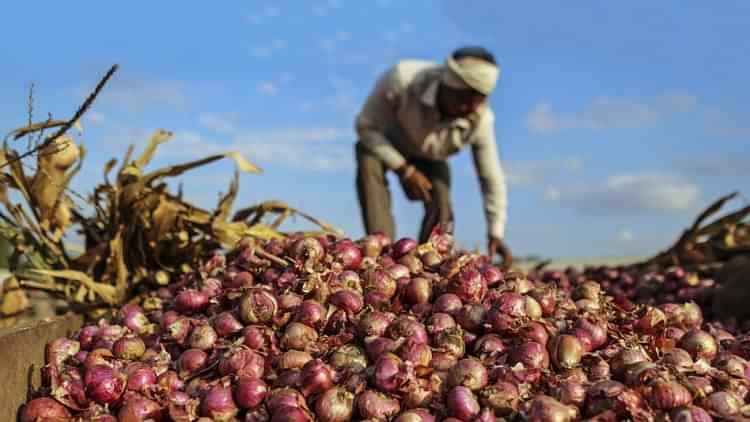 Onion Farmer | Image Credit: nationalheraldindia.com