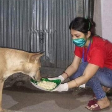 A Pawsome member feeding a Stray dog at night. Image credit: Tripura Infoway