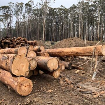 A Spike In The Felling And Logging Of Trees Amid The Coronavirus Inflicted Lockdown