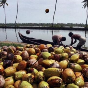 Coconut Industry in India